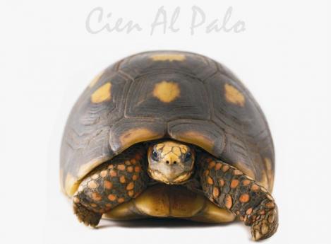 Cien al palo: rock de tortuga